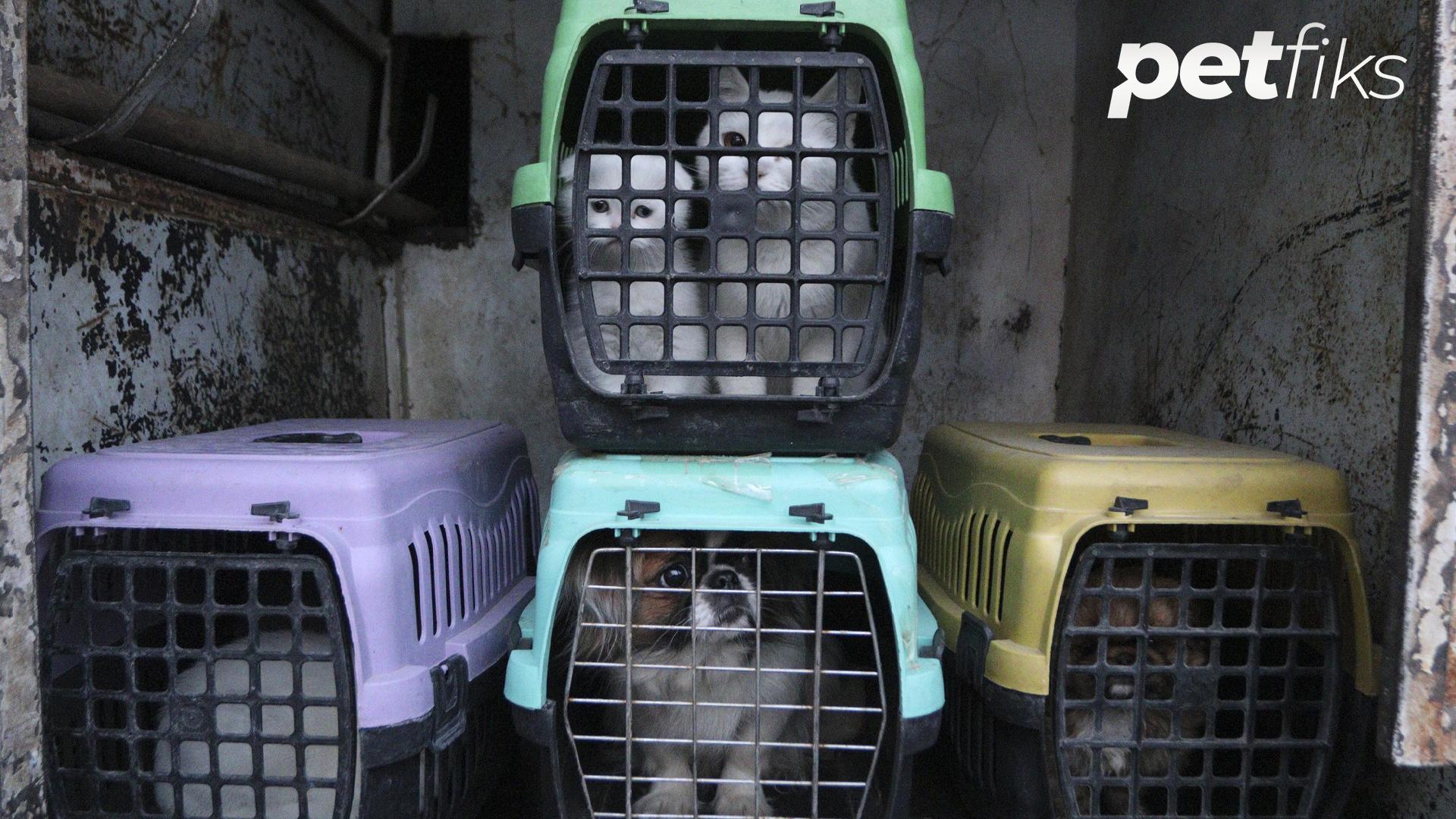 Petshoptan Alınan Hayvan İade Yasası