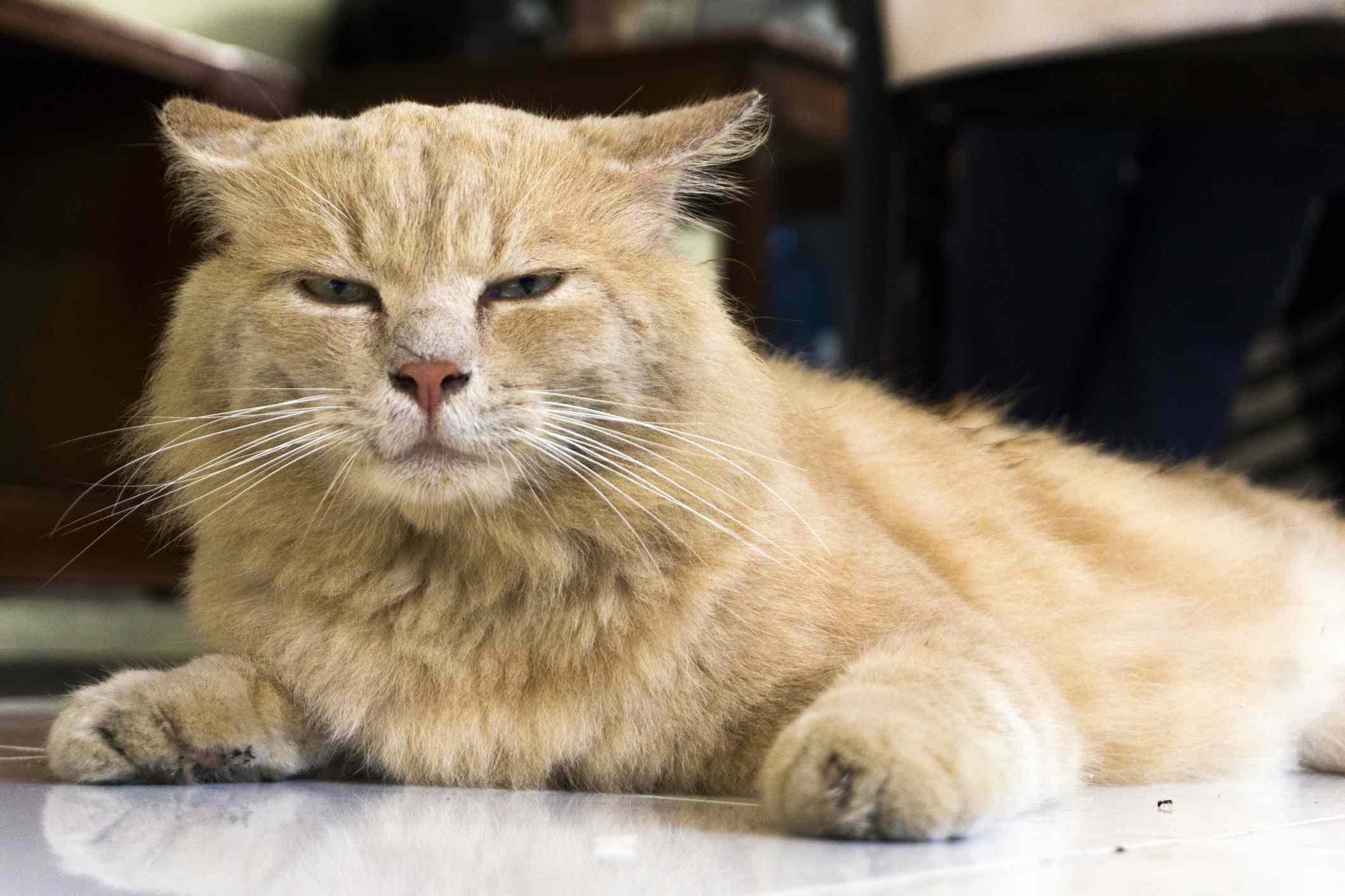 Kediler Ne Söylediğimizi Anlar Mı?