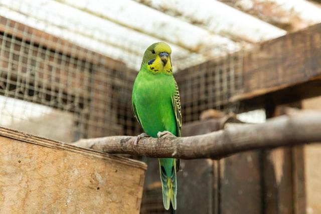 Muhabbet Kuşu İshalinin Olası Diğer Sebepleri