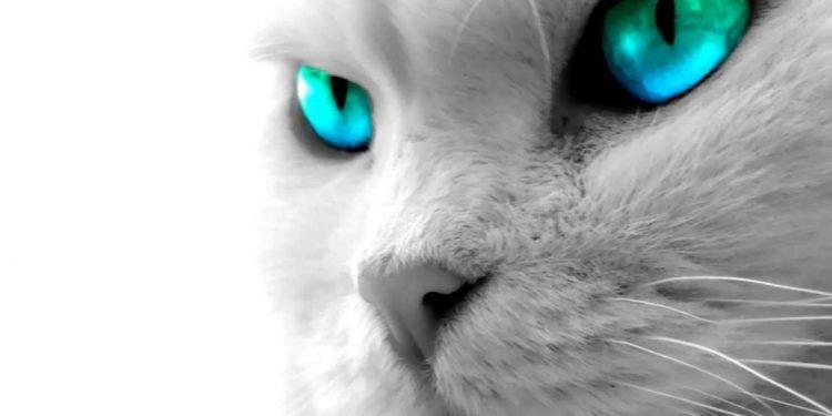 Kediler Neden Hırlar? Hırlama Sesi Nedenleri