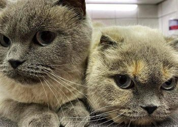 Kediler Annelerinden Ne Zaman Ayrılır?