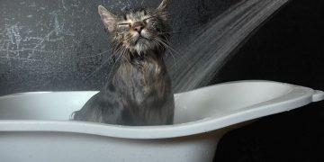 Kedi Nasıl Yıkanır? Yıkarken Dikkat Edilmesi Gerekenler?