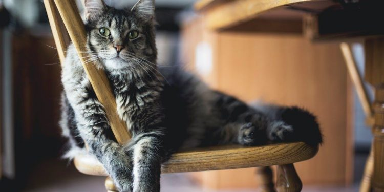 Kedilerde Kabızlık Neden Olur? Çözümü Nedir?