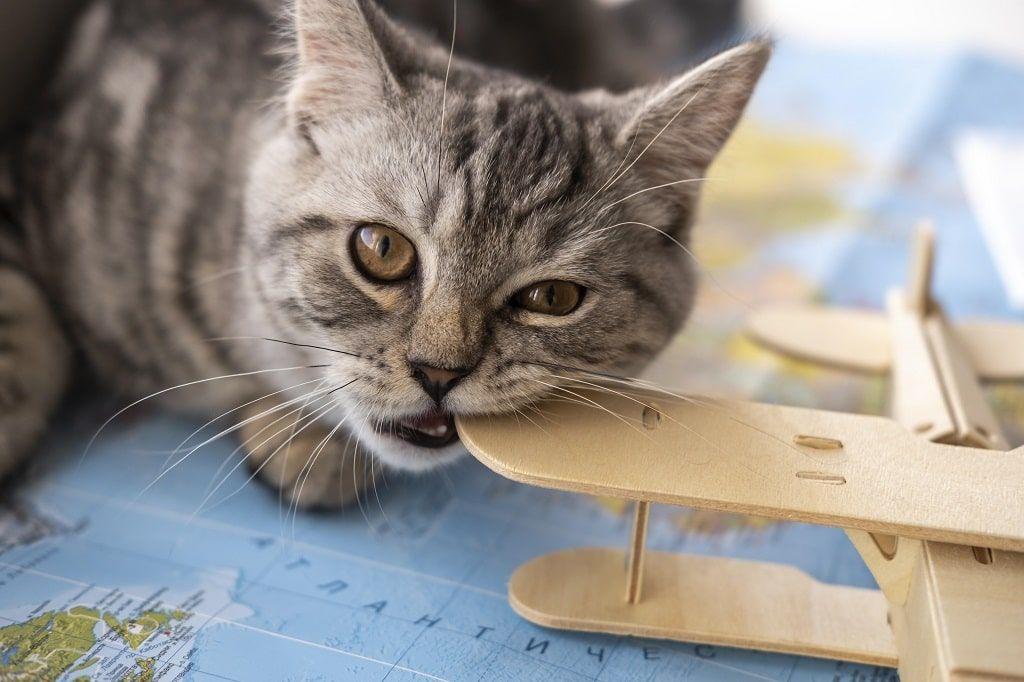 Kedi Kısırlaştırma Ücretleri Ne Kadar? Ücretsiz Kedi Kısırlaştırılır Mı?